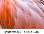 close up of greater flamingo... | Shutterstock . vector #642153688