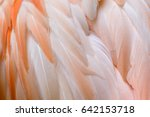 close up of greater flamingo... | Shutterstock . vector #642153718
