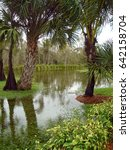flooded field and palm trees in ... | Shutterstock . vector #642158704