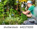 Choosing Garden Plants. Professional Landscaper Trying to Pick Right Plants For His Garden Project. Garden Store Shopping. - stock photo