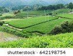 green tea meadow | Shutterstock . vector #642198754