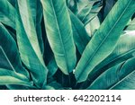 tropical foliage  large green... | Shutterstock . vector #642202114