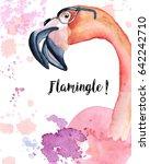 watercolor pink flamingo in... | Shutterstock . vector #642242710