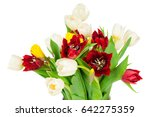 photo of tulips isolated on... | Shutterstock . vector #642275359
