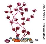 watercolor red seaweed  stones... | Shutterstock . vector #642321700