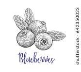 blueberries vector drawing....   Shutterstock .eps vector #642350023