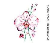 wild orchid in watercolor. good ... | Shutterstock . vector #642370648
