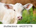 cow | Shutterstock . vector #642372778