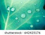 beautiful details of nature.... | Shutterstock . vector #642425176