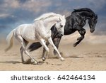 Stock photo black and white horses run in desert dust 642464134