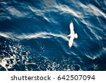 Stock photo top view of silhouette of flying seagull bird flies over the sea flight of bird with blue sea 642507094