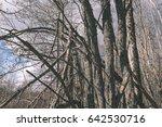dry broken tree branches on the ... | Shutterstock . vector #642530716