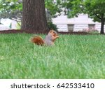a squirrel in the park enjoy... | Shutterstock . vector #642533410
