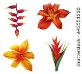 Flowers Of Tropical Garden ...