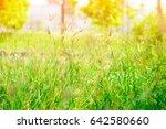 The Flower Of The Grass  Blur...