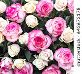 roses. large bouquet. pattern... | Shutterstock . vector #642672178