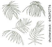 set of hand drawn tropical... | Shutterstock .eps vector #642692776