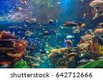 shoal group of many red yellow... | Shutterstock . vector #642712666