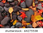 Fallen  Colorful Autumn Leaves...