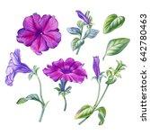 Watercolor Hand Painted Petunia ...
