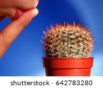 Close Up Of Spiny Cactus In A...