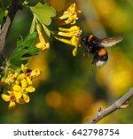 Bumblebee In Flight Drinks...