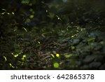 fireflies blurred light in the...   Shutterstock . vector #642865378