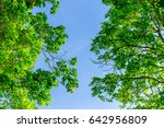 the branches of tree stand in...   Shutterstock . vector #642956809