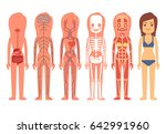 medical woman body anatomy .... | Shutterstock . vector #642991960