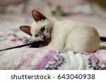 Stock photo playing kitten 643040938