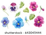 Watercolor Set Of Pansy Flower...