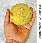 Small photo of A fruit of aegle marmelos