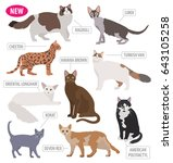 cat breeds icon set flat style... | Shutterstock .eps vector #643105258