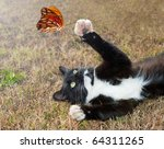 Stock photo black and white kitty cat playing with an orange butterfly in flight 64311265