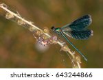 A Green Dragonfly And Large...