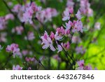 bright cherry flowers on branch ... | Shutterstock . vector #643267846