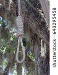 Small photo of Hangman's noose by a tree
