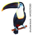 Toucan Detailed Drawing ...