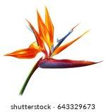 Strelitzia Flower Realistic...