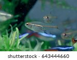 aquarium fish in china | Shutterstock . vector #643444660