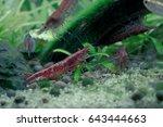 aquarium fish in china | Shutterstock . vector #643444663