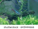 aquarium fish in china | Shutterstock . vector #643444666