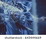 aquarium fish in china | Shutterstock . vector #643444669