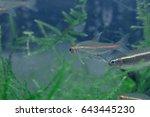 aquarium fish in china | Shutterstock . vector #643445230