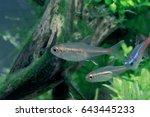 aquarium fish in china | Shutterstock . vector #643445233