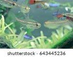 aquarium fish in china | Shutterstock . vector #643445236