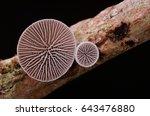 Wild Fungi From Borneo Forest