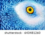 closeup photo of a yellow eye... | Shutterstock . vector #643481260