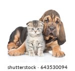 Bloodhound Puppy Embracing...