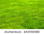 fresh green manicured lawn... | Shutterstock . vector #643540480
